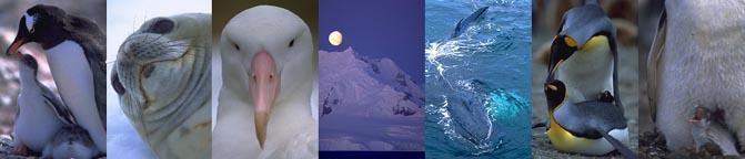 http://terramater.com.br/imagens/Antartica/Falkland_montagem.jpg